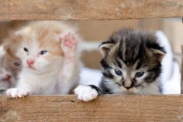 Come costruire una cuccia per gatti fai da te